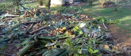 Makerere Plantation Demolitions