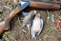 Doves Reportedly shot Dead, Mixed Reactions on social media