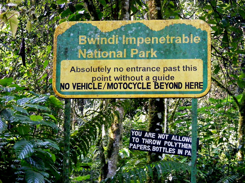 UNRA set to construct a Road through Bwindi National Park